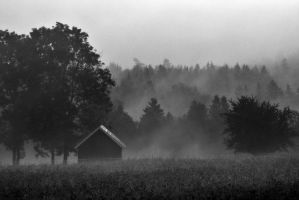 Misty Morning by henkeliduu