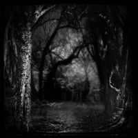 Black Woods by intao
