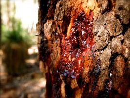 Red Gum Tree by jacobjellyroll
