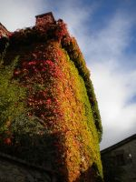 Ivy-covered house by montmartre96