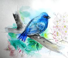 Blue bird of hapiness by Thalie-Na