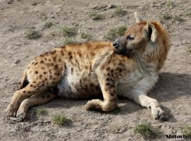 Relaxing hyena by AzureHowlShilach