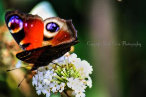 Butterfly project V by PaulVonGore
