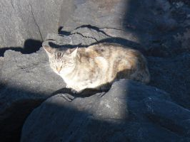 Stray cat on a rock in the beach arena night time by Natalia-Clark