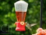 Hummingbird 6 by Champineography