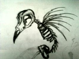 Bird Skeleton by XmalawiXheartX