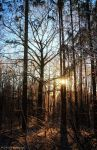.: Golden winter Forest :. by Frank-Beer
