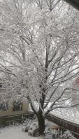Snowy Tree by InkQueenPilus