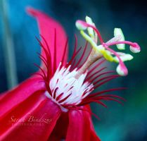 tropic flower. by Blueberryblack