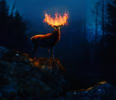 Lord of  the fire by Nikola096