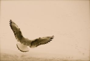 i believe i can fly by mortenthoms
