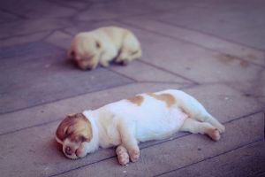 Puppies by tongomez