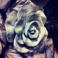Rose of Stone by ThousandEchoes