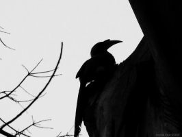 silhouette in the forest by ViktorCylo