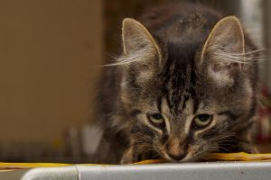 Kinky 2 (cat's name) by craigp-photography