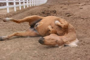 Mufasa rolling by Misc-Photography