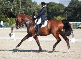 National Dressage and Jumping_149 by CalyHoney