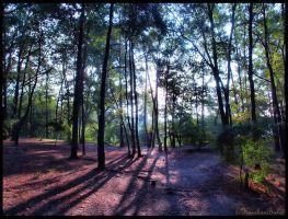 Forest in the morning by carolinbie