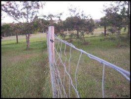Fence by p858snake