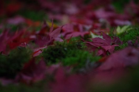 Red Leaves on Moss Dark by klopez3