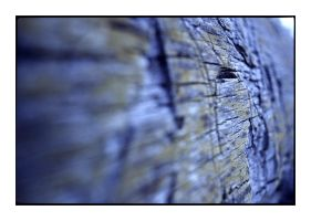 denmark - weathered bark by redux