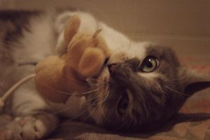 Cat playing with mouse by JohnTheByronicHero
