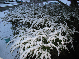Sparkly Snow-Covered Bushes by TheArmouredBear