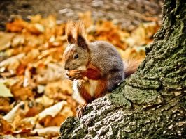 Squirrel by Virfir
