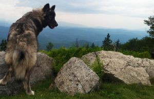 Thyra Wolfdog by BrackenWulf