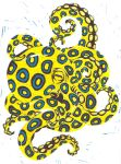 Blue Ringed Octopus by BlackMagdalena
