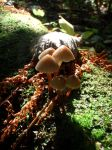 Autumn mushrooms by ano-the-simple