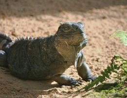 Basking in the Morning Sun by DracoFlameus