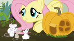 Fluttershy, a Pumpkin, and its Residents by Comeha