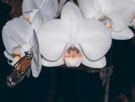 Orchids and a Butterfly by KBeezie