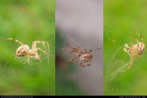 Spider Stock 0003 by phantompanther-stock