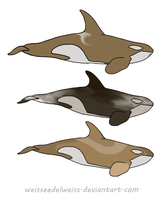 Antarctic Killer Whales for Adoption (CLOSED) by WeisseEdelweiss