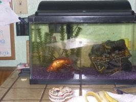 My Big-arse Gold fish by Bugabooloo