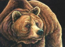 Bear pastel portrait by Bisanti