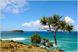 Pandanus at Fingal Head by wildplaces