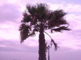palm tree in the sky by loobyloukitty