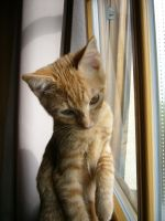 Window Kitten by Strouze