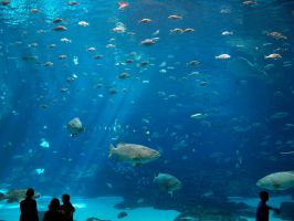 Georgia Aquarium 6 by Dracoart-Stock