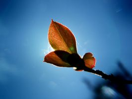 Purty little leaf... by iluvobiwan91