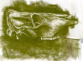 Cow Skull by babymint34