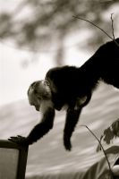 too many monkey pictures. by erinerinerinerinerin