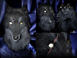 Black wolf by RadyWolf