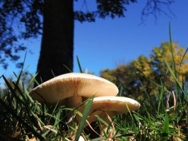 Bug's View of Mushrooms by Amber-Loves-Horses