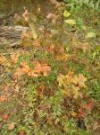 Fall Colors-Brown by dhbraley
