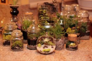 Terrarium Creations by lbenologa