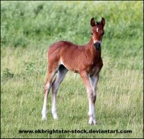 Friendly Mare Foal 1 by okbrightstar-stock